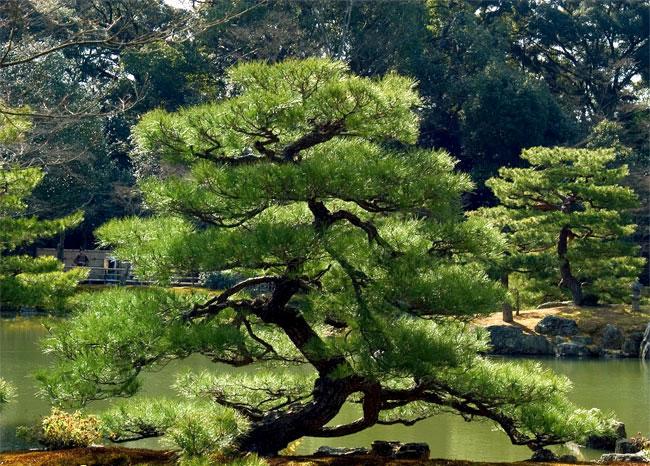 Taoismul – cea mai veche filosofie ecologistă