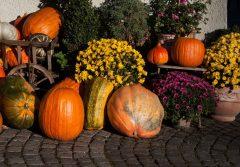 aranjament floral halloween decoratiuni dovleci