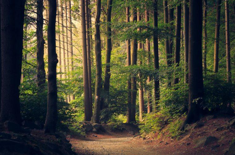 Poveştile Pădurii – Scurtă plimbare etnologică printre arbori